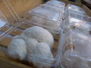 Lion's Mane Mushrooms from Screaming Oaks Mushroom Farm