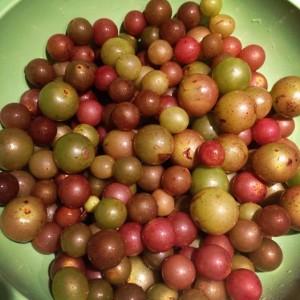 Pick up some muscadine shrub and Kombucha from the Kombucha Girls at the Saturday Covington Farmers Market!