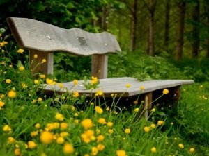 flower-wallpapers-wallpaper-widescreen-nature-bench-flowers-yellow-wallpaper-44297