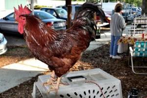 Tabasco, the Covington Farmers Market mascot Roux-ster