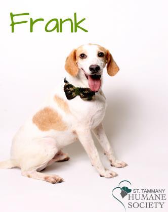 sths-frank-adoptable-21116